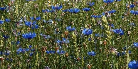 featuredflowers